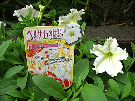 Berubara Fleurs 18650993img-0041-jpg