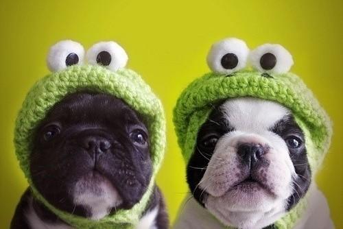 RANILANDIA - Página 12 Cute-dogs-fantasy-frog-Favim.com-180781