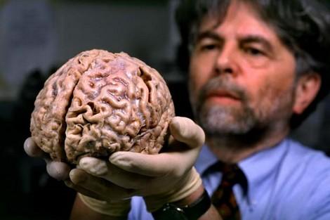 أداء دماغ الانسان يبدأ في التراجع اعتبارا من سن الـ45 Northernbrain_539952654