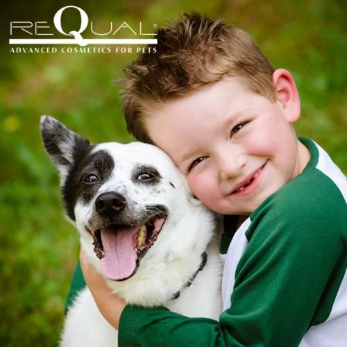 """Интернет магазин товаров для собак """"Волча"""" 2478109c034750c36ec6a1e8831fcba1"""
