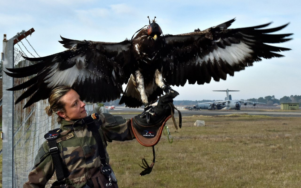 Animaux soldats - Page 6 6685143_cdd0ffc348222a58f220d8e0f21851bee99c06af_1000x625