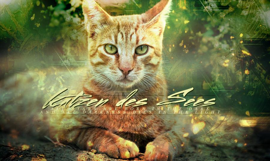 Katzen des Sees