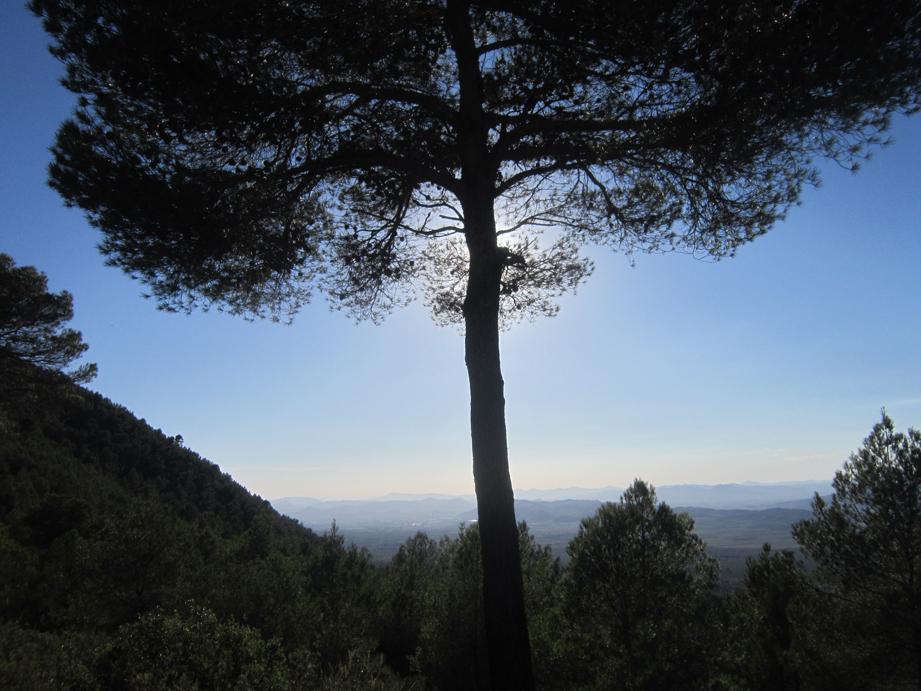 EL RECONCO,Biar + COVA NEGRA (ruta motosenderista) Biar120