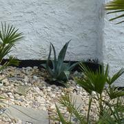 Určení druhu rostliny - Stránka 6 7.5.2013_36