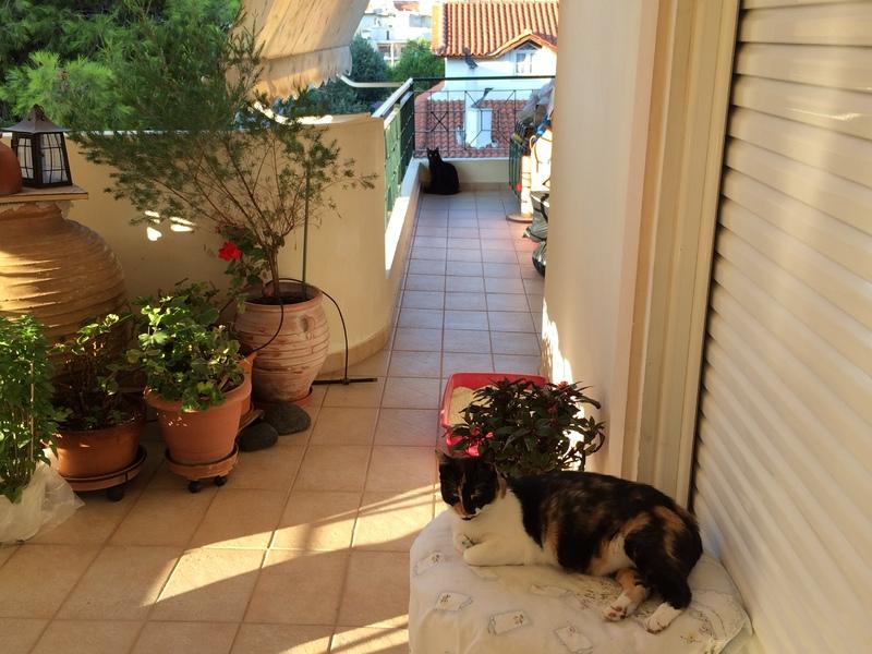Κάρι, μια υπέροχη γατούλα και τα 4 μωράκια της - Σελίδα 11 Kira_Milou_26_8_14_2