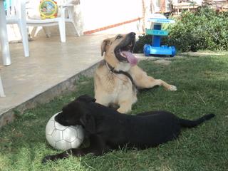 photos de vos chiens et de leurs copains de tous genres  DSC00988