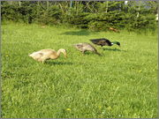 Naši zvířecí pomocníci P5010031