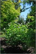 Léto na zahradě - Stránka 2 DSC_0019