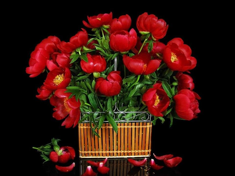 Crveno cveće - Page 6 8248_551305908366458_7085265649099932172_n