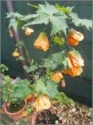 Léto na zahradě P5261108