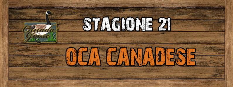 Oca Canadese - ST. 21 OCA_CANADESE