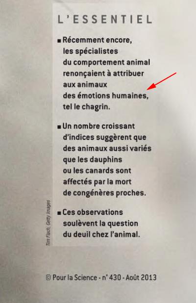 lapidation de singes: Monkeys Stoning an Adulterous Female Image