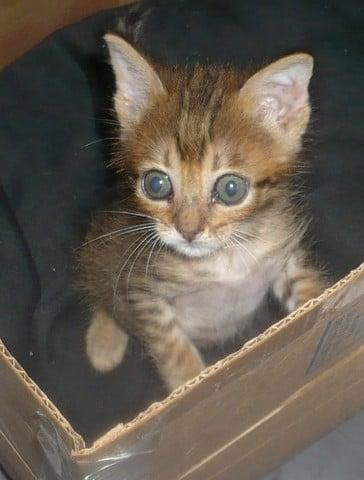 Ma Petite gatita de 1 mes en adopción- Écija Petit4