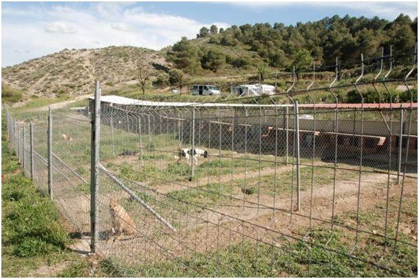 Neue Auffangstation....Tiere in Spanien 4381386