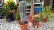 Tropické kaktusy WP_20160813_13_38_45_Pro