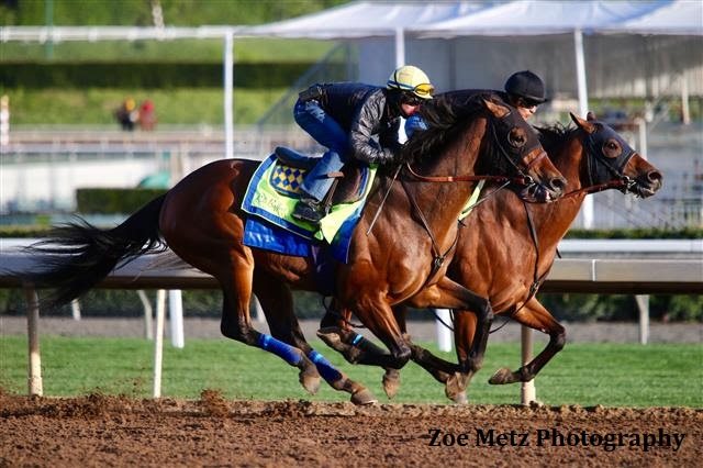 West Coast Brillante En Su Ultimo Trabajo Previo A Su Viaje A La Dubai World Cup West_Coast_JAN21
