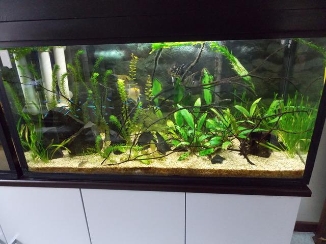 Aquário plantado de 200 litros - Página 2 Image