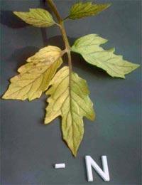 Nutrição de Plantas Aquaticas: Função, Deficiência e Fertilização. Nutricao_vegetal_2