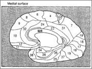 ブロードマン地図、脳回と脳溝、ペンフィールドのホムンクルス図 Fig_VI2
