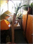 Pomoc při zařazení rostliny PB071964