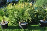 Léto na zahradě - Stránka 3 DSC_0013