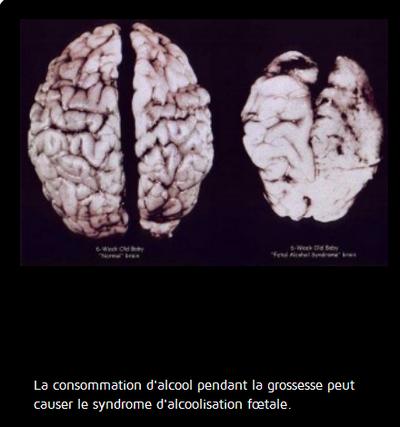 le Vin preuves scientifiques : christianisme détruit vos neurones Vin2