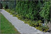 Léto na zahradě - Stránka 2 DSC_0010