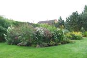 Léto na zahradě - Stránka 3 DSC_0025