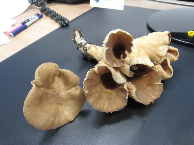 Cogumelos... IMG_6231