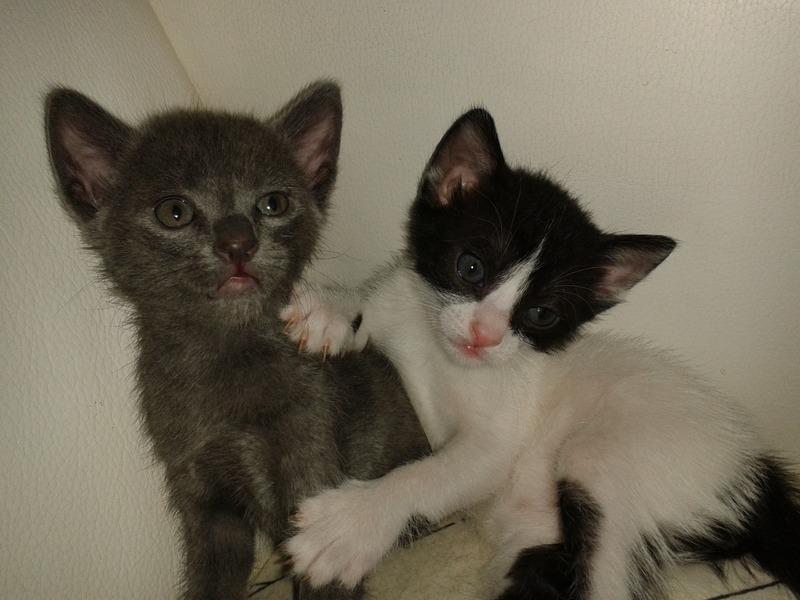 3 γατάκια, 2 μηνών 20140725_201131