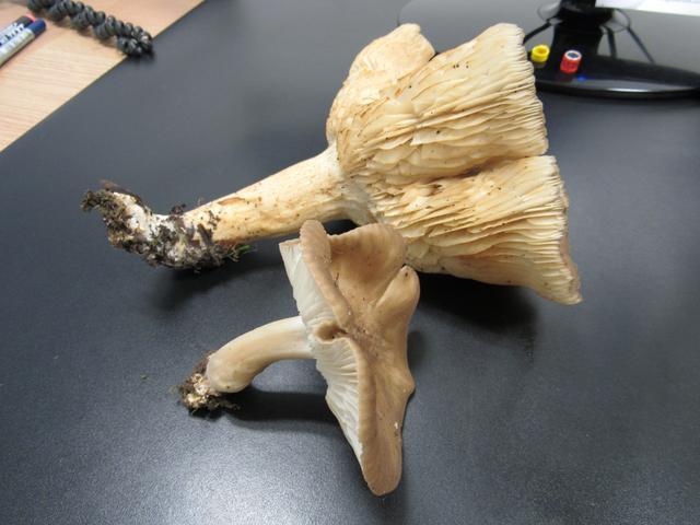 Cogumelos... IMG_6228