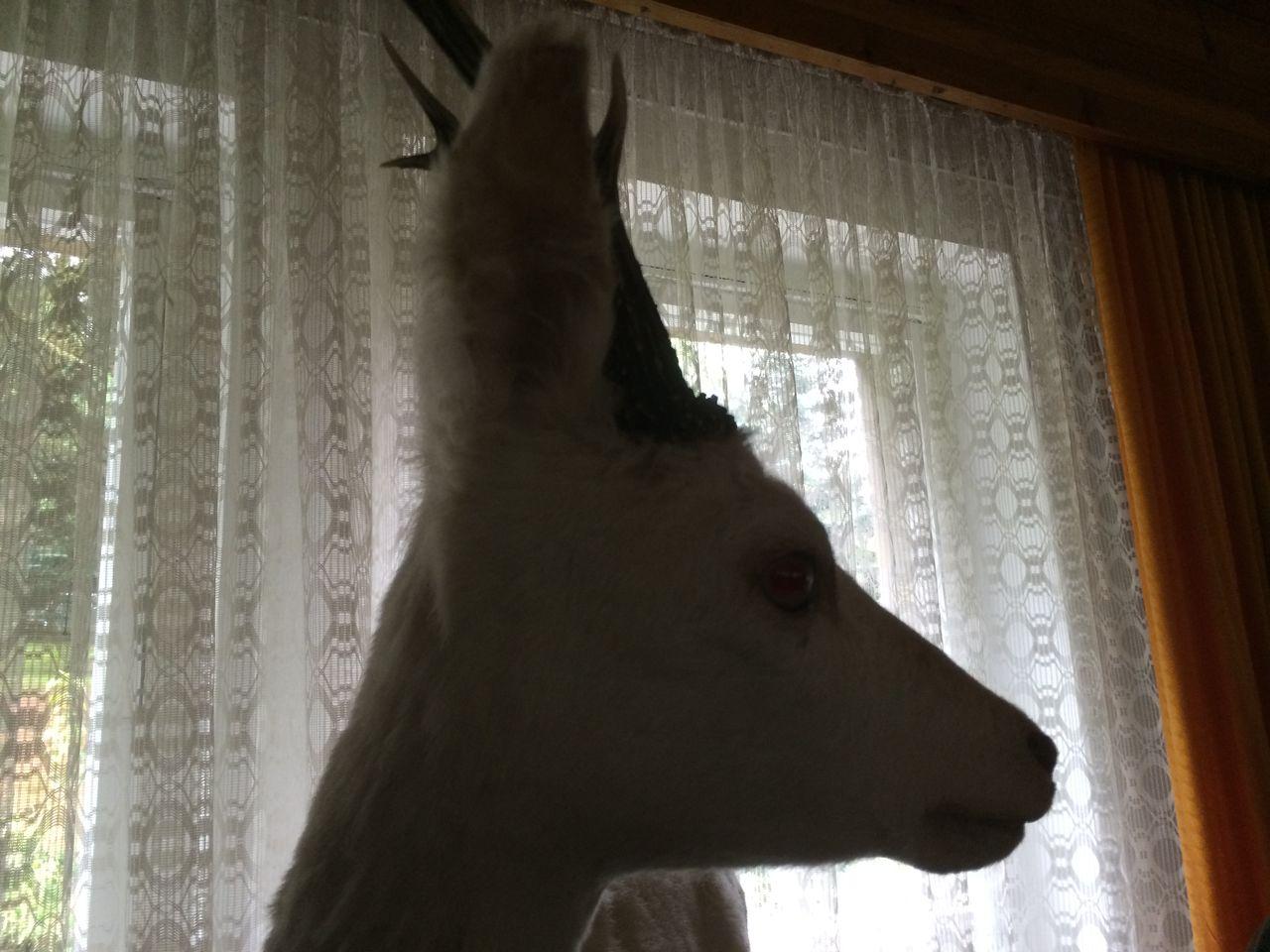 ein Bock im Wohnzimmer IMG_2279