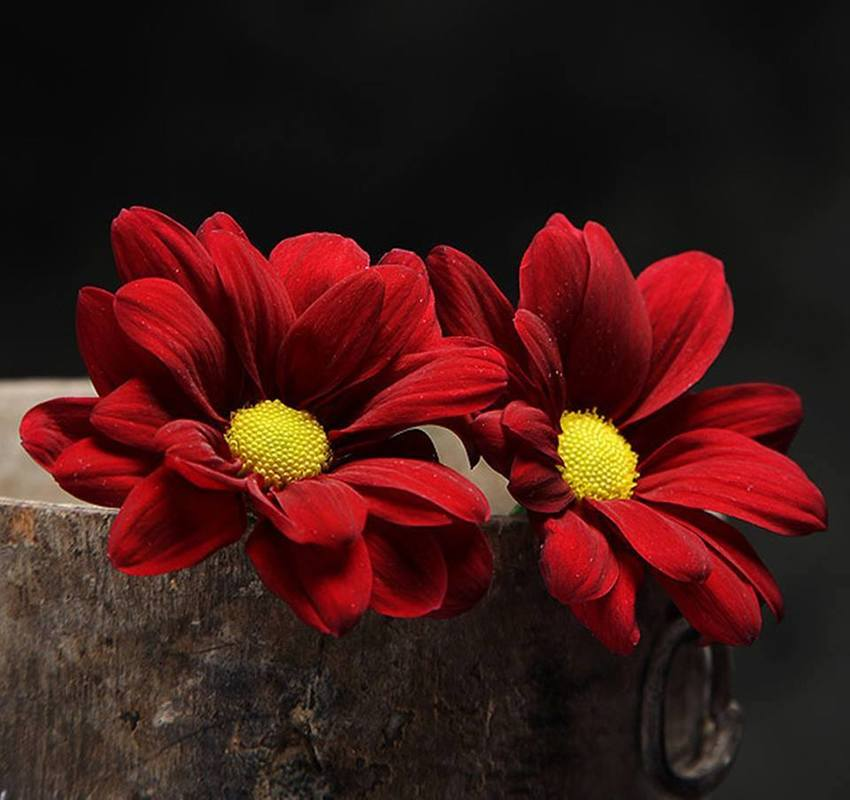 Crveno cveće - Page 6 12004818_504274259736290_1749024863906847512_n