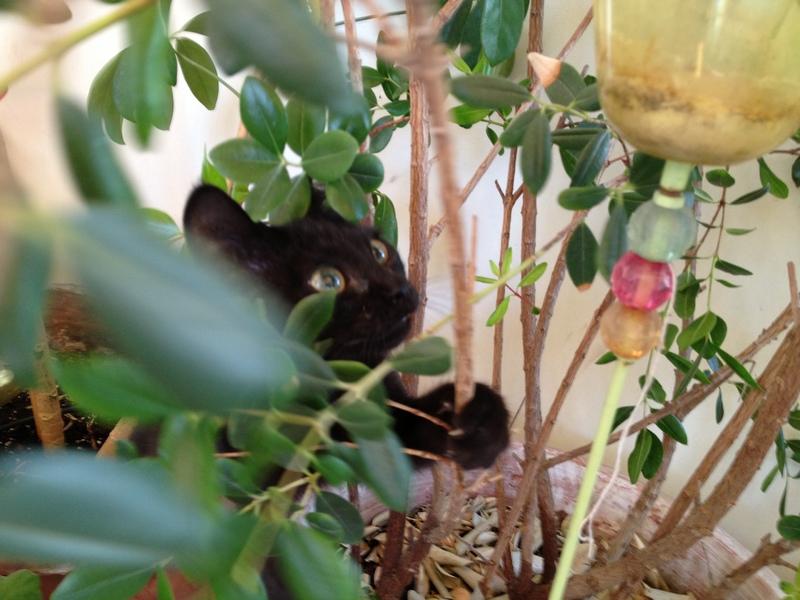 Πανθηράκος 2,5 μηνών αναζητάει την οικογένειά του Mailo_002