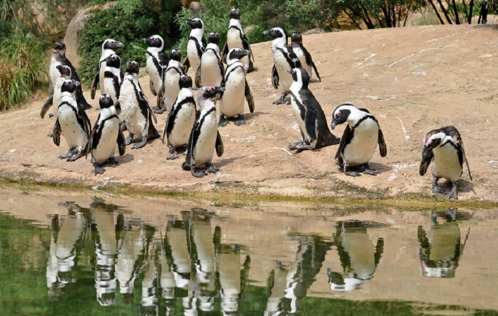 Pingvini - Page 3 66pl8onkcts