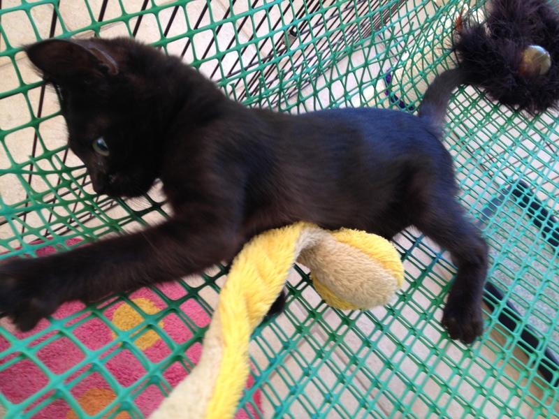 Πανθηράκος 2,5 μηνών αναζητάει την οικογένειά του Mailo_089