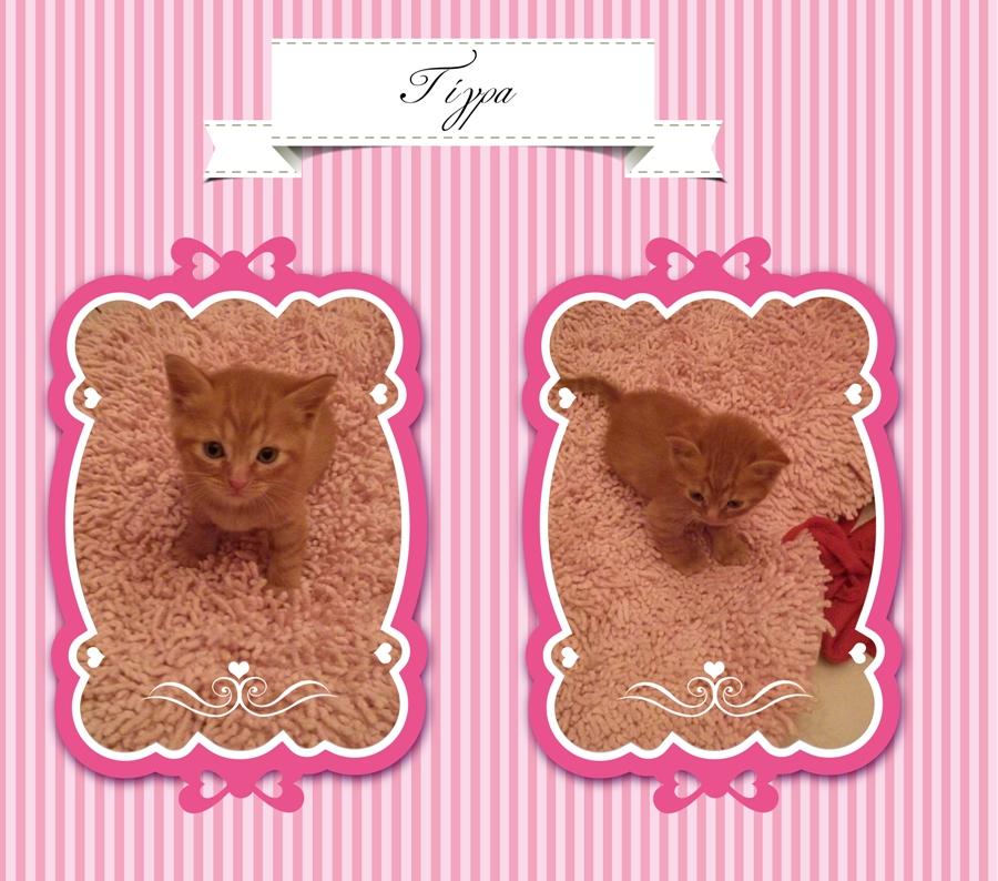 Χαρίζονται γατάκια (μαμά Περσίας) Baby_cats_02