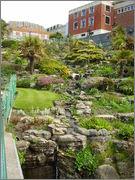 rostliny v Anglii - inspirace P4190056
