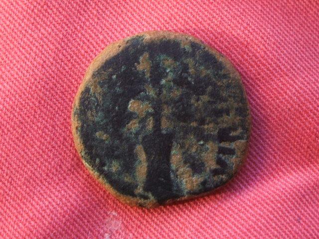 Semis de Carteia. Por Tiberio. 014
