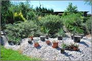 Léto na zahradě - Stránka 2 DSC_0013