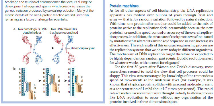 DNA replication of prokaryotes - Page 2 DNA_replication_and_recombination123456