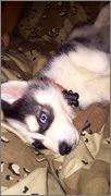 Oakley's puppy scrapbook! Photo_Dec_29_9_56_52_PM