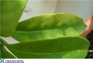 Болезни/паразиты хой - Страница 2 C867156358f1t