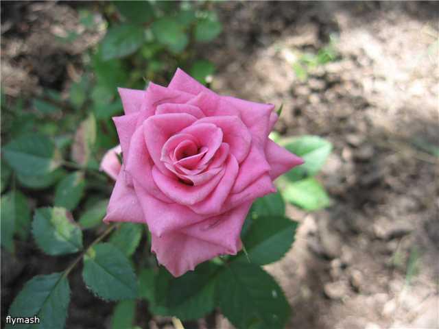 Во саду ли, в огороде... - Страница 2 4186715cacd0