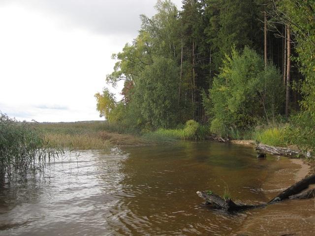 За грибами в Конаково (Тверская область, Волга)! 492a0e18ffe2