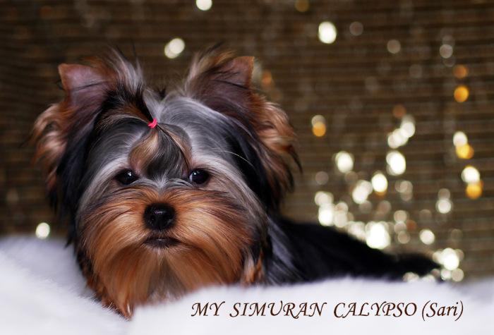 My Simuran Calypso (Сари)  Db3d115786c8
