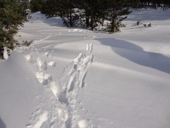 Зимняя сказка на наших фотографиях - Страница 14 F63484d0f005