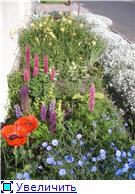 наши домашние цветники - Страница 2 265538cf0a39t
