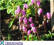 Весенне цветущие 97d3ba160b94t