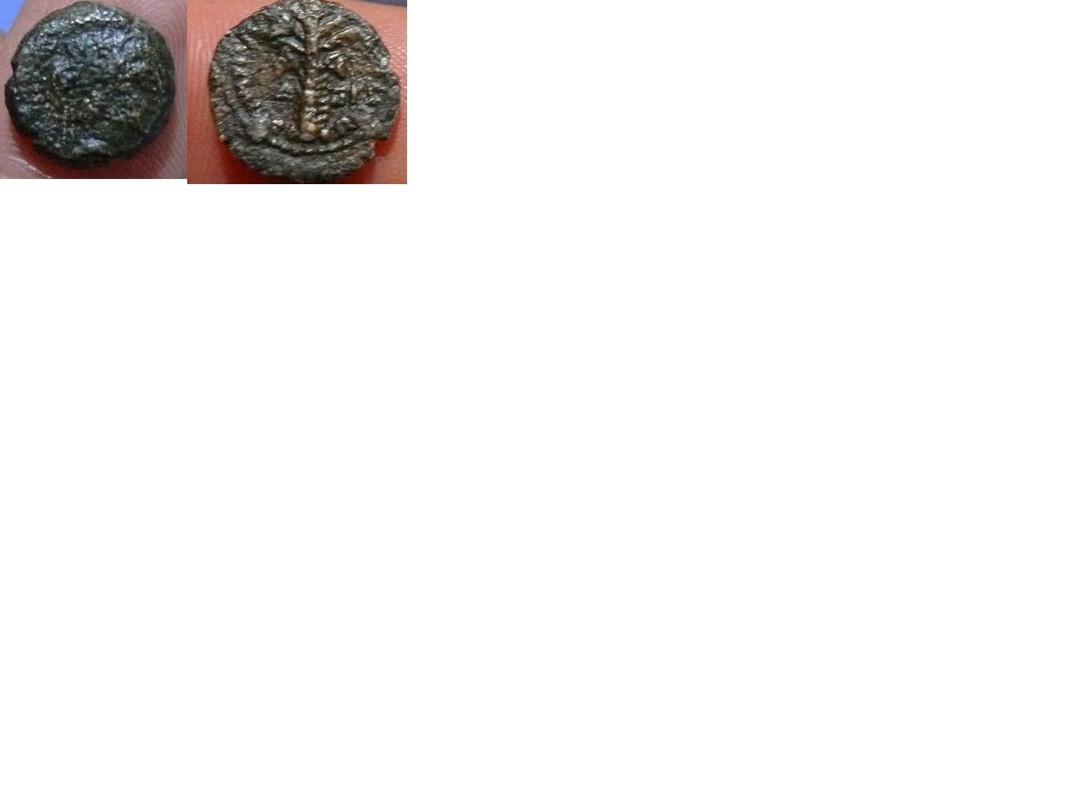 AE12 de Demetrio II Nicator. BAΣIΛEΩΣ ΔHMHTPIOY. Tiro de Fenicia Moneda_palmera